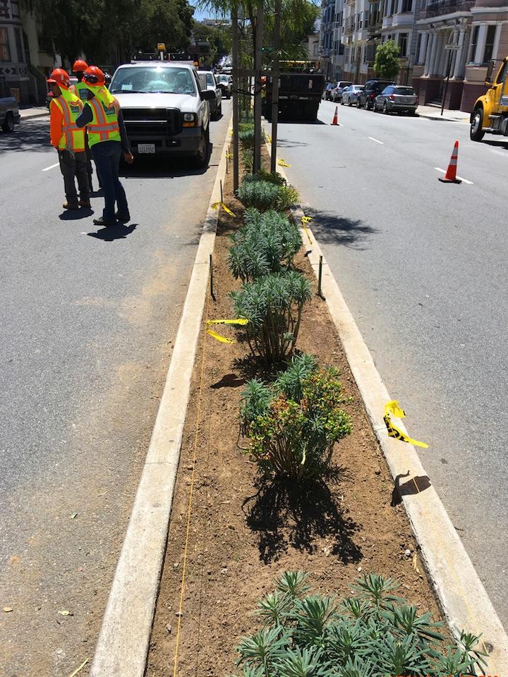 median planting 5.2.16